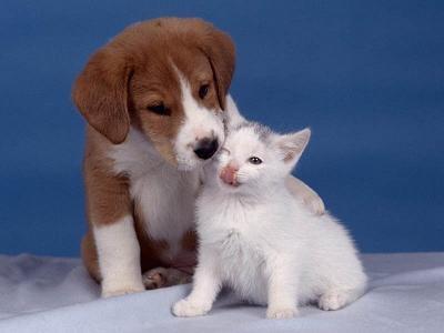 perros-gatos-2